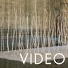 CAT_44-(video)